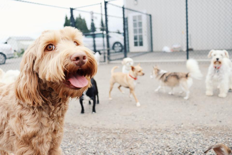 Why you (and your dog) will love doggy daycare at Rover